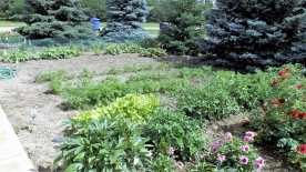 Cast Your Vote for Best Residential Vegetable Gardens GULL LAKE Town Beautification  Communities in Bloom