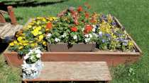 Cast Your Vote for Best Residential Floral Displays GULL LAKE Town Beautification  Communities in Bloom