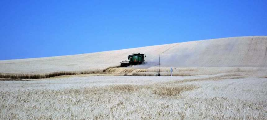 Dry conditions are bringing early harvests to the area - SwiftCurrentOnline.com Agriculture SouthWest Saskatchewan  Crops