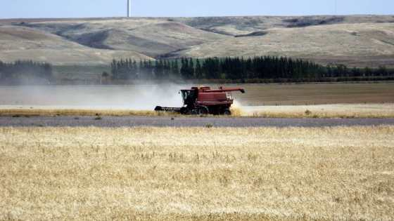 Saskatchewan harvest ahead of five-year average Agriculture SouthWest Saskatchewan  Saskatchewan Crops