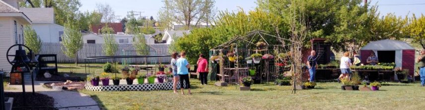 """The Gull Lake Tourism Committee is hosting a """"Bedding Plants Sale"""" at the Museum. Grassy Hill Colony Greenhouse will be on site selling a variety of bedding plants on the following dates: Saturday, May 13th, Friday, May 19th, and Friday, May 26th from 10:30 AM to 3 PM. If anyone is interested in selling items on these dates at the museum, please call Peggy Willman (306) 672-4099 or Betzy (306) 672-4168. Gull Lake Tourism Committee"""
