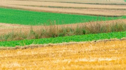 Bayerska jordbruksfärger