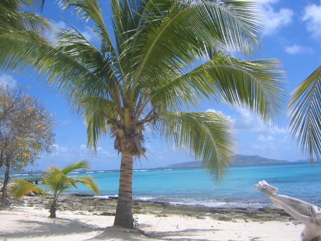 Palm Island Palm Trees Sway