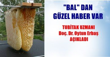 """BÜTÜN YARALAR İÇİN """"BAL"""" ÖNERİSİ"""