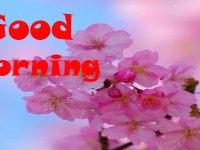 ingilizce günaydın mesajları güzel