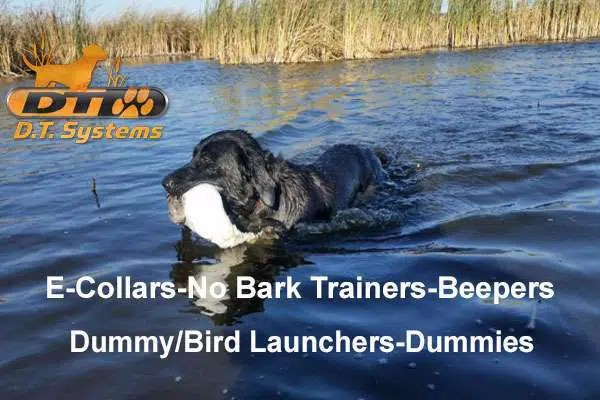 DT Systems e-collars, launchers, dummies, Beepers, Containment