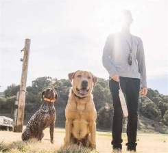 Dogtra Combo Remote Trainer | gun dog outfitter | gundogoutfitter.com
