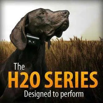 The DT Systems H2O 1810 Plus and the 1820 Plus Dog Trainers