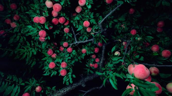 《女神と男神が桃の木の下で別れる:川中島Ⅱ》2016年 作家蔵