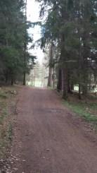 Ut ur skogen