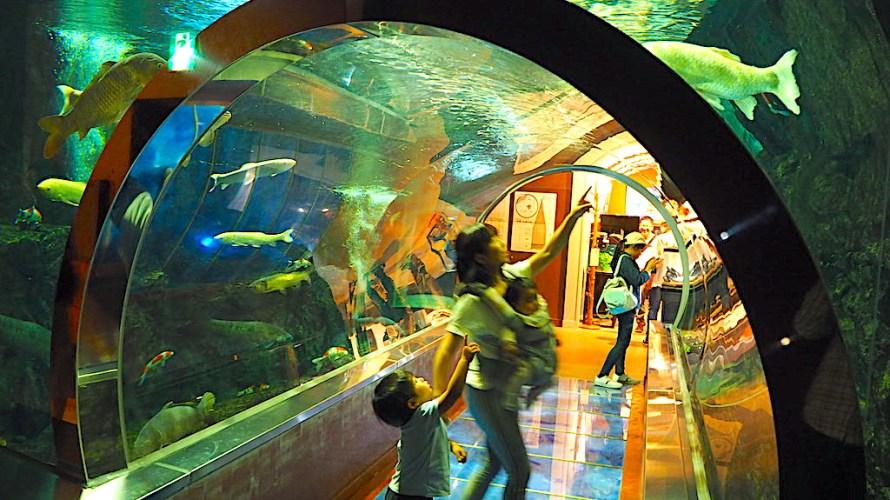 水産学習館は道の駅みなかみ水紀行館の中にある本格派の小さな水族館!【群馬】おすすめスポット