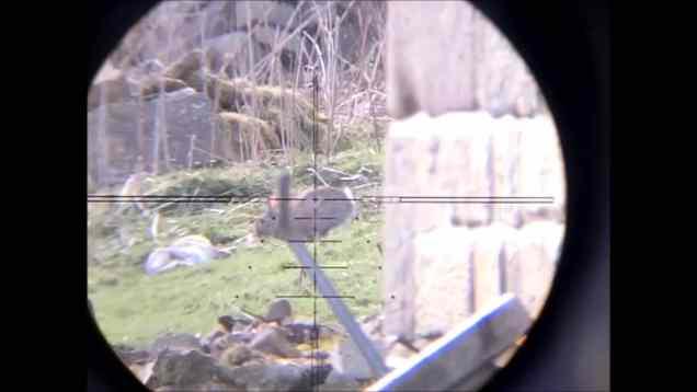 FAC Kalibrgun Scopecam Rabbit Shooting