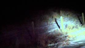 Montana Jackrabbit Hunting