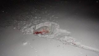 Montana Varmint Hunting Winter Jackrabbits