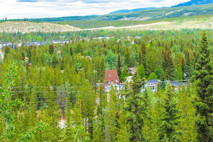 A preview of Whitehorse ecology and climate