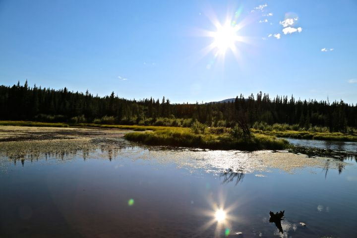 The sun shining at McIntyre Creek pond in Whitehorse (Yukon) | Photo: Gurdeep Pandher