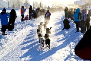 International Sled Dog Race - Yukon Quest 2015
