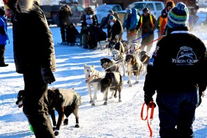 International Sled Dog Race - Yukon Quest 2015