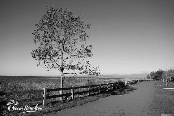 Community Beach seawalk in Parksville, BC