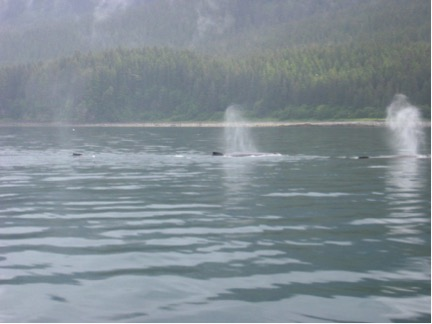 Whales serenade us as we lounge in the natural hot springs of Bishop Bay near Kitimat, B.C.