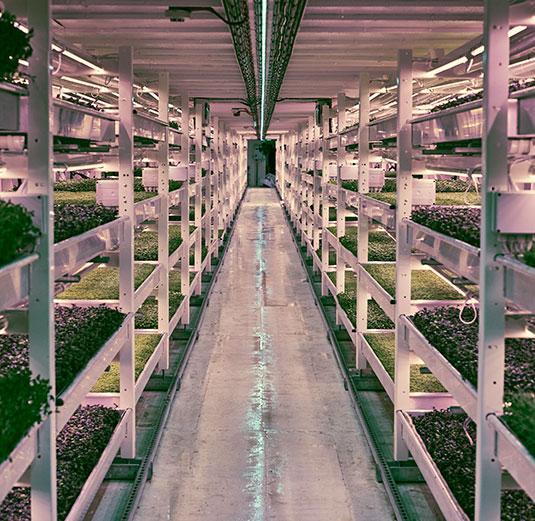 First underground urban farm opens in London