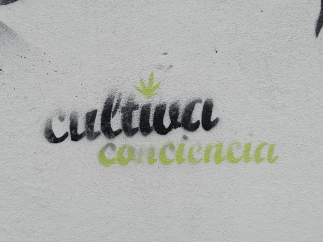 Marijuana legalisation in Uruguay - cultivate consciousness