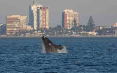 Whale-watch in Uruguay