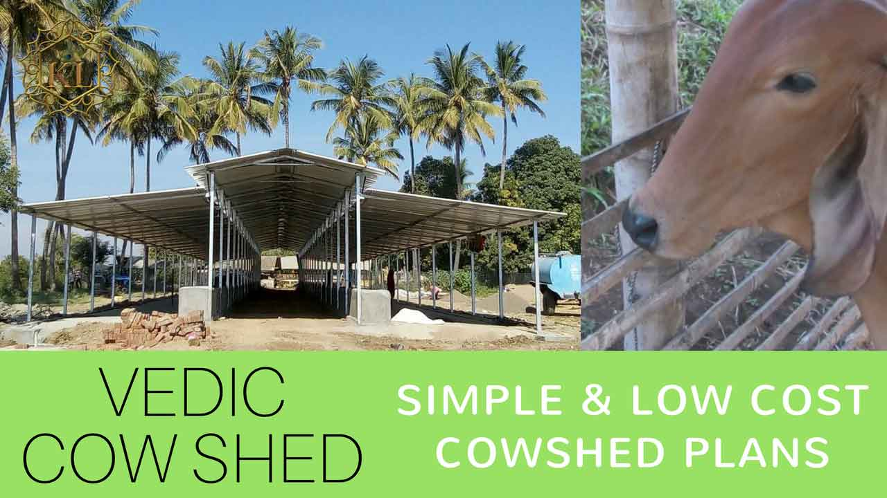 Cattle shed design cow shed planning kl gurukul