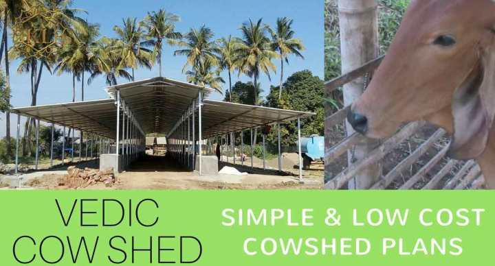 5 Big Mistakes - Cow Shed Design & Planning