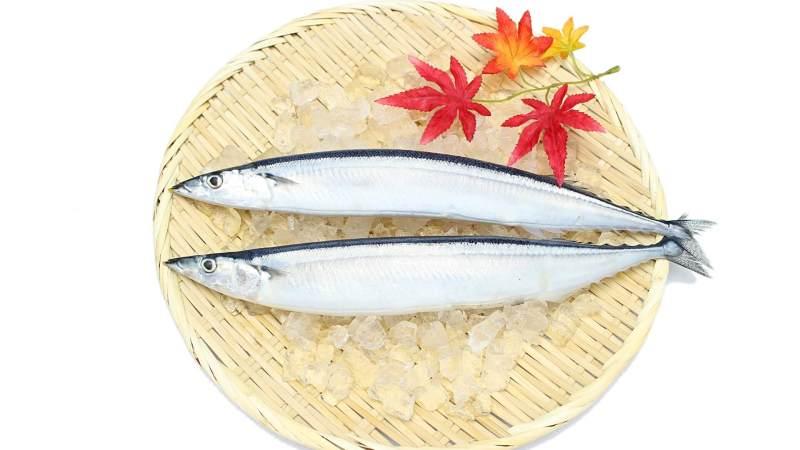 秋刀魚の噺。秋刀魚は炙りでこれからが旬!北海道の秋刀魚は今が美味しい!?