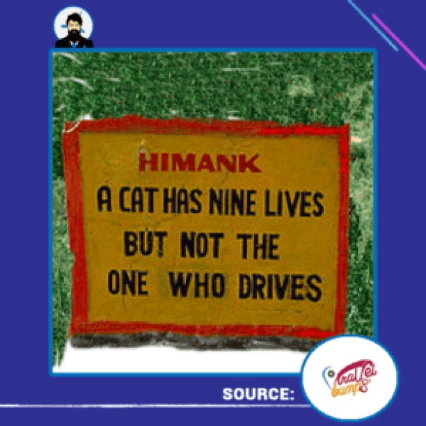 cat-has-nine-lives-but-not-the-one-who-drives
