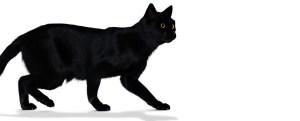 chat-noir