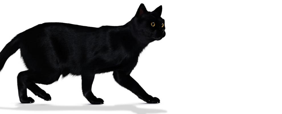 Les chats noirs portent malchance