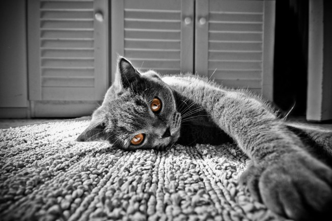 Tired- Stanco, Flickr, CC, by Massimo Regonati