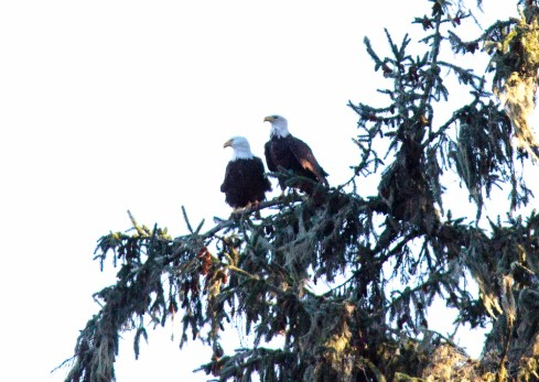 the pair sitting near the nest