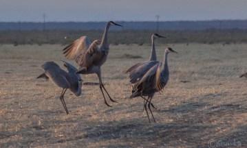 cranes-5500