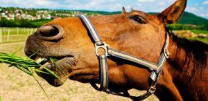 Alimentación del caballo