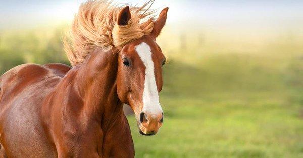 6 caballo