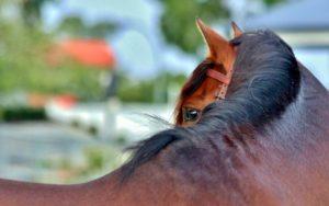 Estrés en los caballos