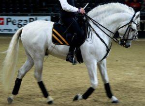 Características del caballo andaluz