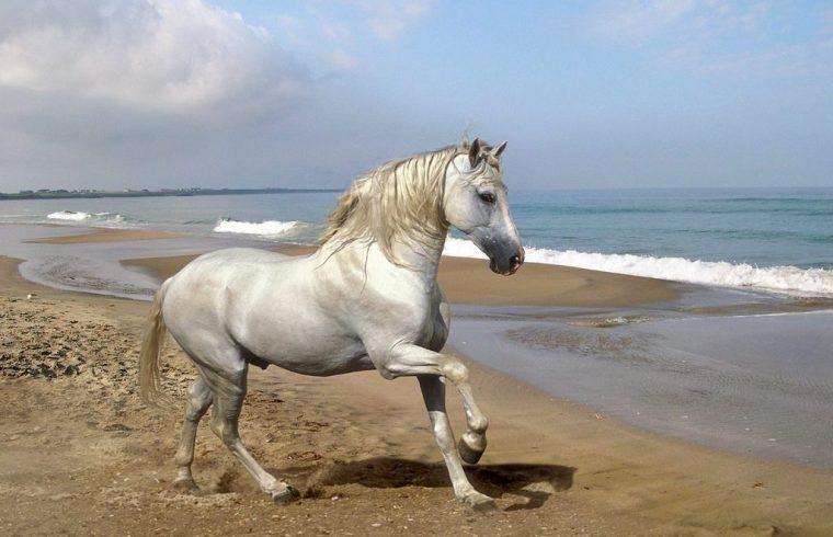 cuidados del caballo andaluz