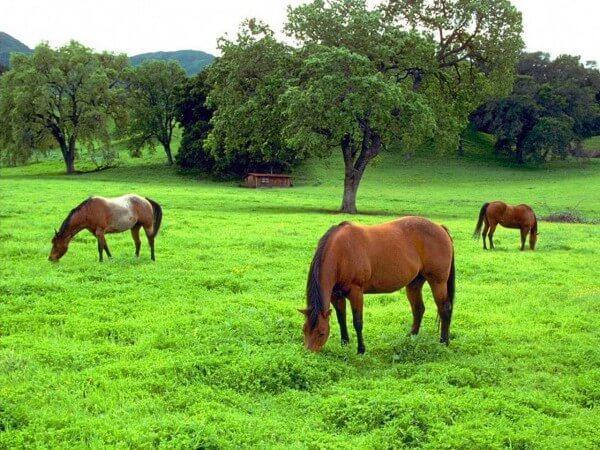 Alimentación-caballo-Gustavo-Mirabal