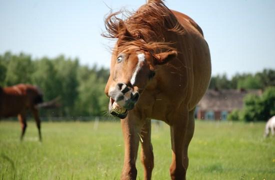 Rabies in horses