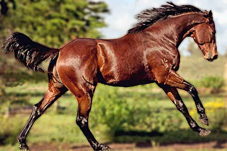 Fusaichi Pegasus