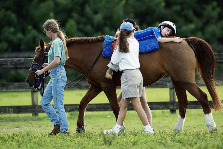Physiotherapy with Equines