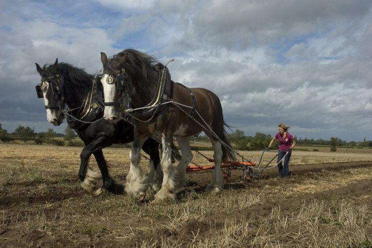 El caballo en la historia de la agricultura