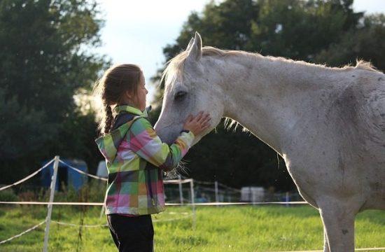 el caballo como terapeuta