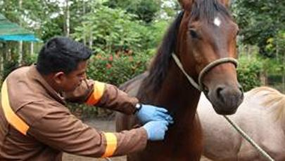 Equine biosecurity