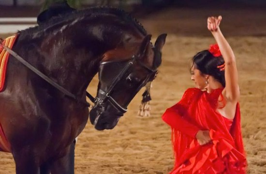 The horse in Spanish flamenco