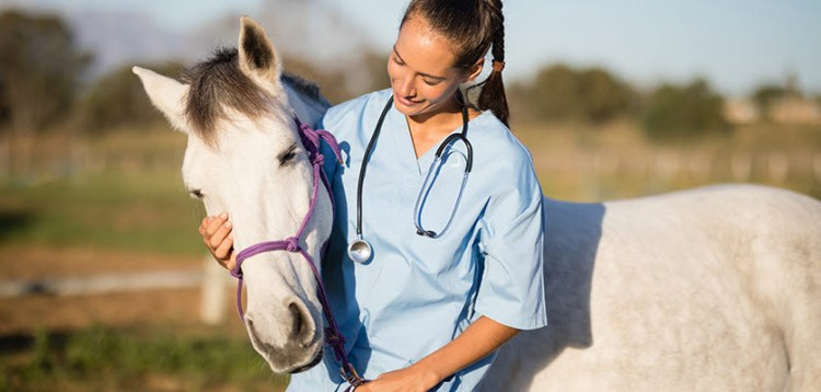 Horse and Veterinarian
